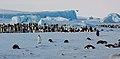 2007 Snow-Hill-Island Luyten-De-Hauwere-Emperor-Penguin-09.jpg