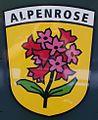 20080629Y304a SPB 62 Alpenrose.jpg