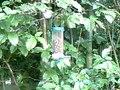 File:2010-06-05-V-Kohlmeise-1.ogv