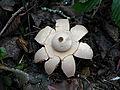 2011-12-28 15-43-57-champignon.jpg