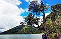 20130531普达措国家公园碧塔海人行步道2 - panoramio.jpg
