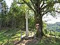2017-07-28 Wanderung rund um den Haltgraben in Frankenfels (073).jpg