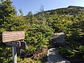 2017-09-11 10 27 43 View east along the Maple Ridge Trail at the junction with the Frost Trail on the western slopes of Mount Mansfield within Mount Mansfield State Forest in Underhill, Chittenden County, Vermont.jpg