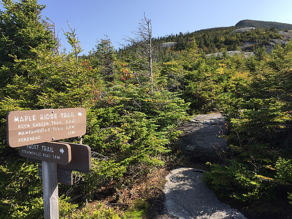 2017-09-11 10 27 43 View east along the Maple Ridge Trail at the junction with the Frost Trail on the western slopes of Mount Mansfield within Mount Mansfield State Forest in Underhill, Chittenden County, Vermont
