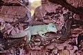2019. Крокодиловый каньон в Ейске 071.jpg