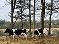 20190310 Lunsveen boswachterij Gieten-Borger.jpeg
