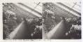 201 - La serre aux aralées - Parc de la Tête d'or - 1907.tif