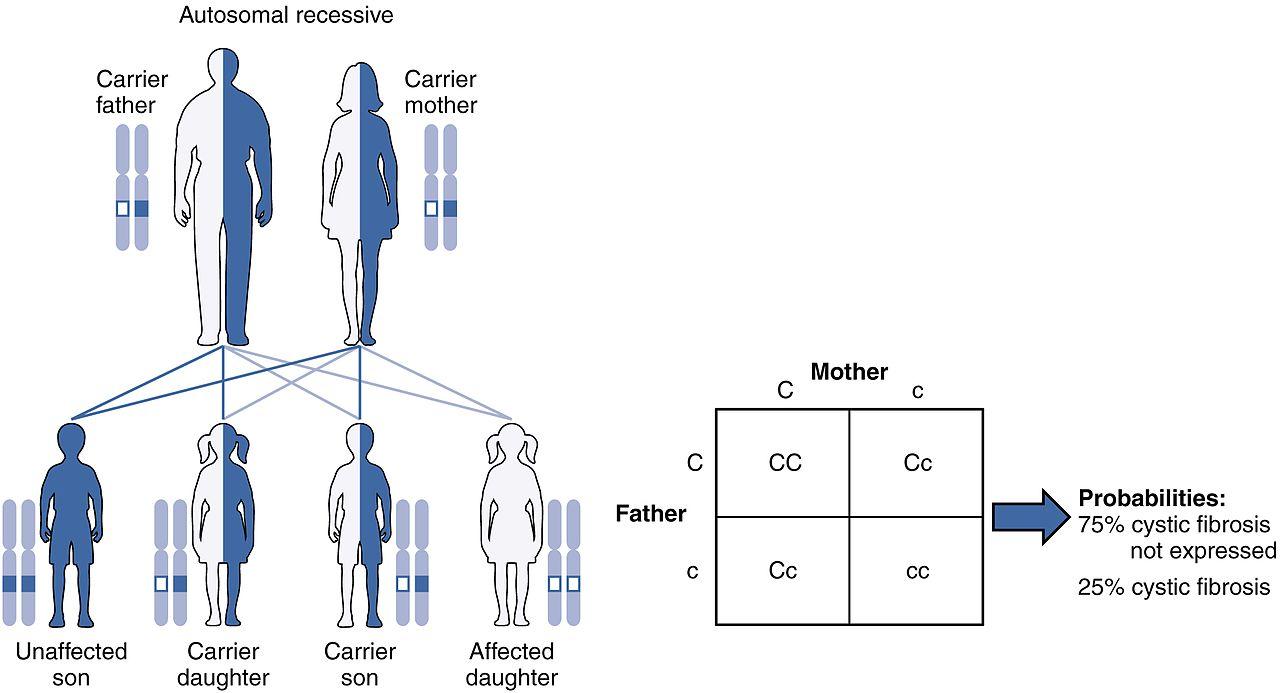 autosomal dominant and recessive punnett square