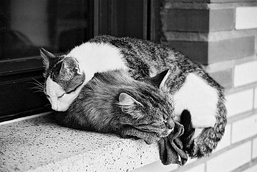 2 chats en pleine sieste (7061080177)