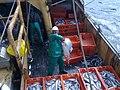 30052015582 aboard trawler African Queen.jpg