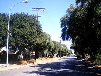 Lassen Street Olive Trees (Chatsworth, California) - Lassen Street Olive Trees (2009).