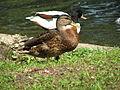 A Silesian Zoological Garden jac 06.JPG