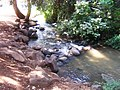 A Stream in Hurshat Tal National Park פלג בחורש טל - panoramio.jpg