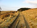 A farm track on Auldshiels Hill - geograph.org.uk - 634704.jpg
