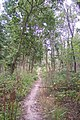 A footpath in Clowes Wood (2) - geograph.org.uk - 1520896.jpg