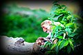 A monkey with his infant in Alwar, Rajsthan.jpg