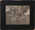 A northern Alberta apple tree (HS85-10-16449) original.tif