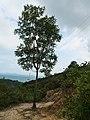 A tree in mountain.jpg