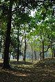 Acharya Jagadish Chandra Bose Indian Botanic Garden - Howrah 2011-01-08 9746.JPG