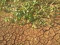 Adat Ombathumuri Paadam Thrissur Photo1697.jpg