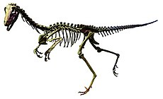 Alaskan troodont (white background).jpg