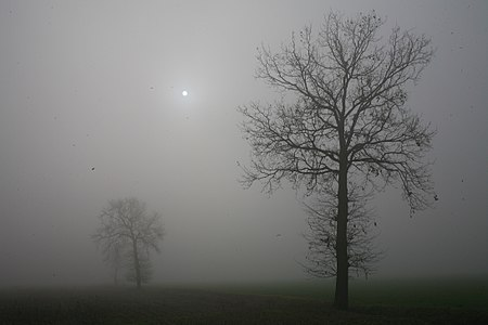 Two trees and the sun in a foggy day in Pavia, Italy
