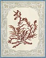 Algae or seaweed specimen, pasted on colored construction paper, framed by paper lace doilies. The algae have been arranged into designs and scenes, 1848.jpg