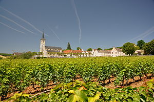 Aloxe-Corton - The village, surrounded by its vineyards.