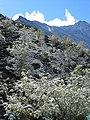 Altai0086 (93590332).jpg