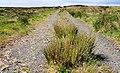 Altikeeragh Nature Reserve near Castlerock (4) - geograph.org.uk - 1911867.jpg