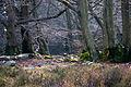 Altkönig Naturpark Taunus 1.jpg