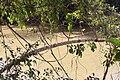 Alto Araguaia - State of Mato Grosso, Brazil - panoramio (1070).jpg