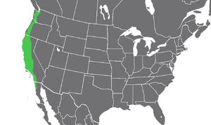 Amanita ocreata map.png