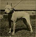 Amateur's dog book; (1906) (17487596024).jpg