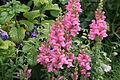 Amboise, fleur d'un parterre 4.jpg