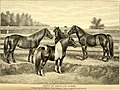 American horses and horse breeding - a complete history of the horse from the remotest period in his history to date. The horseman's encyclopedia and standard authority on horses, embracing breeds, (14598288289).jpg