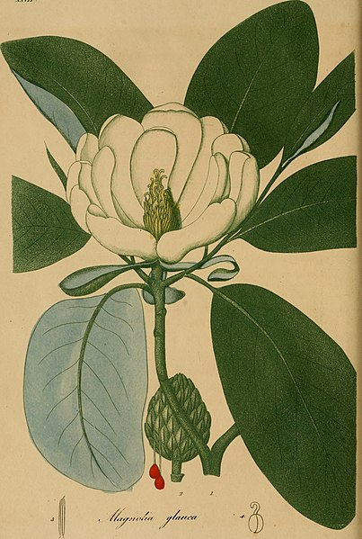 File:American medical botany, being a collection of the native medicinal plants of the United States, containing their botanical history and chemical analysis, and properties and uses in medicine, diet and (14764623455).jpg