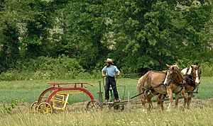 English: Amish raking hay in southeast Ohio.