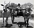 Ancient automotive of our villages...stilll in use thoughh.jpg