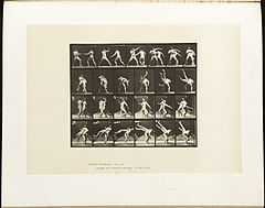 Animal locomotion. Plate 332 (Boston Public Library).jpg