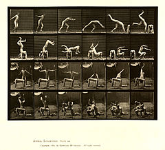 Animal locomotion. Plate 364 (Boston Public Library).jpg