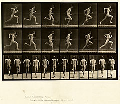 Animal locomotion. Plate 62 (Boston Public Library).jpg