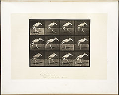 Animal locomotion. Plate 774 (Boston Public Library).jpg