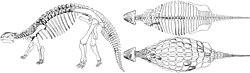 definition of ankylosaurus