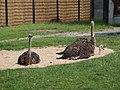 Antwerp Zoo (12210344175).jpg