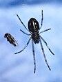 Araña diminuta eb Bastavales.jpg