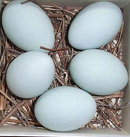 Ardea cinerea eggs.JPG