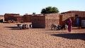 Ardiak eta ahuntzak - Ovejas y cabras - Saharauiak.jpg