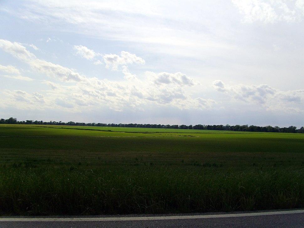 Arkansas Delta, Desha County, AR