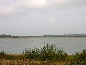 Site of Special Scientific Interest - Arlington Reservoir, a 99.4 hectare (245.6 acre) biological SSSI in Arlington, East Sussex